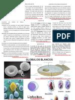 Monografías (células del cuerpo)