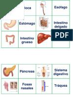 Memorice de Sistema Digestivo y Respiratorio