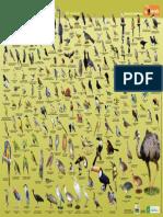 Aves Cartaz Terceira Ediçao 2017 (1)