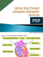 2-strukturdanfungsibahagian-bahagianjantung-140521062027-phpapp02.pdf
