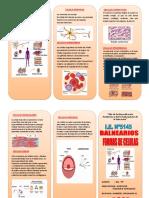 Formas de Celula