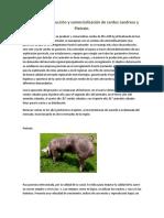 Incubación, Producción y Comercialización de Cerdos Pietrain y Landrace