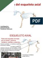 Anatomia Esqueleto Axial
