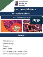 Bacteria Morfologia 1