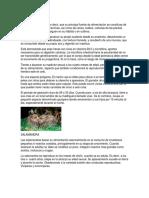 Alimentacion y Reproduccion de Animales