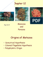 05 Chap 12 Sponges and Placozoa