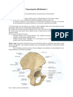 osteolog