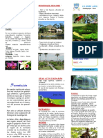 triptico_selva_alta.pdf