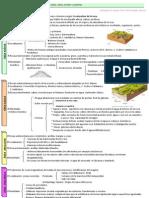 1.2. Esquema-guión. Variedad litologica, dominio siliceo, calizo, arcilloso y arcilloso. Relieves de erosión diferencial