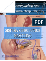 52979207-sistema-reproductor-masculino-122.pdf