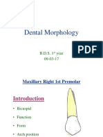 maxillary
