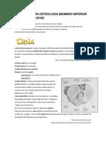 part2 Osteologia Miembro Inferior