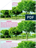 infos-about-trees.pptx