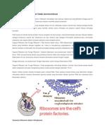 Ribosom- Pengantar Biomolekuler