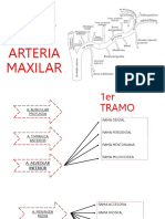 Arteria Maxilar Nenes