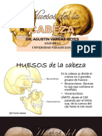 3.Huesos de La Cabeza-frontal