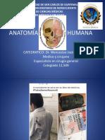 Introduccion a La Anatomia Humana Para Est