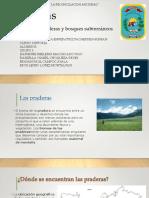 Biomas Historia
