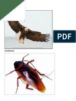 Animales Aéreos.docx