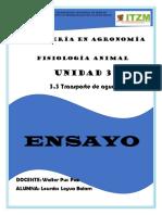 Ensayo La Relacion Del Agua