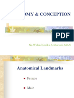 Anatomy and Conception New Wulan