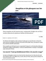 Hécatombe de dauphins et de phoques sur les côtes américaines