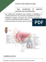 Aparato Genital Masculino 2.pptx
