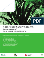Cultivo Maguey