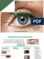 Patología palpebral, conjuntival y corneal.