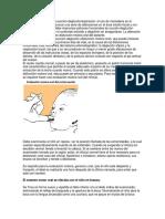 Disfunción motora oral lactante.docx
