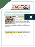 Adoptar No Comprar Terminado PDF