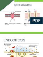 Endocitosis