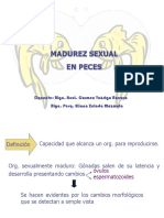 4da Madurez Sexual