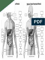 sistem pencernaan manusia.docx