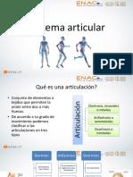 6ta Clase Sistema Articular y Muscular