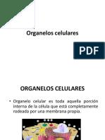 Organelos celulares Biología