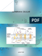 Membrana Celular 2