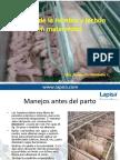 Charla Manejo de La Hembra y El Lechon en Maternidad (2)