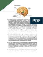 La amígdala cerebral - lectura comprensiva