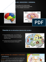 Morfologia Del Cerebro