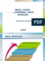 m. of chest, abd, back