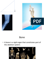 Types of Bones and Joint in the Body_Sem