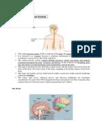 Anatomy of Stroke