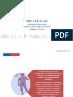 Anatomìa Snc y Celulas