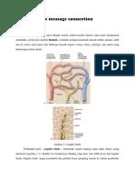 anatomi pembuluh limfe.docx