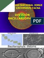 Bacillarophyta