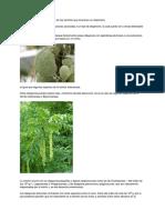 Estructuras de dispersión en las plantas.