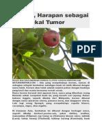 Kersen, Harapan Sebagai Penangkal Tumor