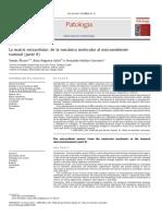 1.La Matriz Extracelular- Morfología, Función y Biotensegridad