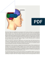 Frontal Lobes.docx